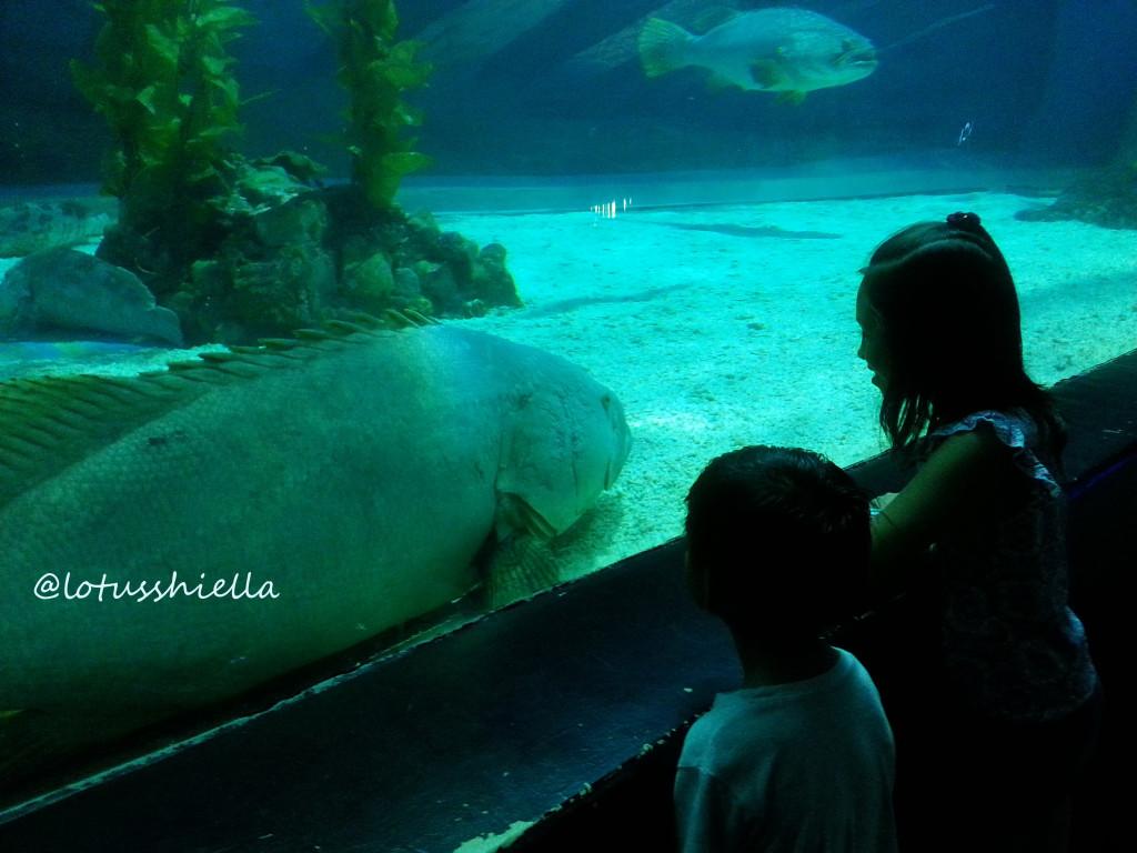 ManilaOceanPark_Oceanarium2