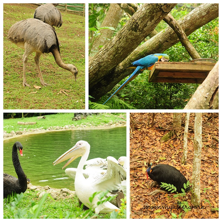 Cebu Safari_Birds
