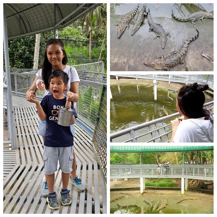 Cebu Safari_Crocodiles