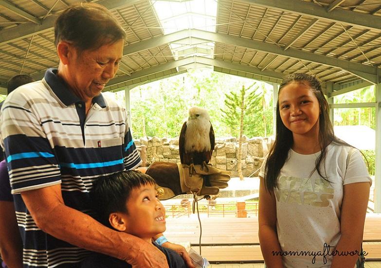 Cebu Safari_Eagle
