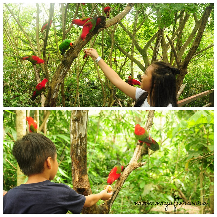 Cebu Safari_Feeding Birds