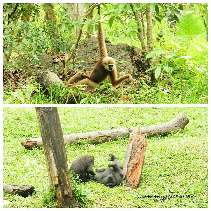 Cebu Safari_Orangutowns