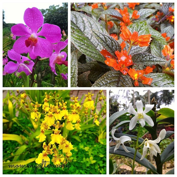 Cebu Safari_Orchids and Mayanas