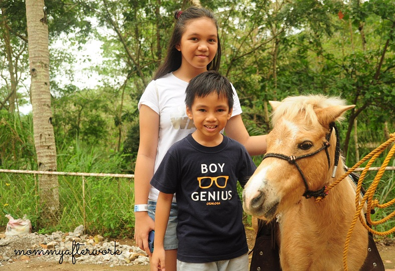 Cebu Safari_Pony