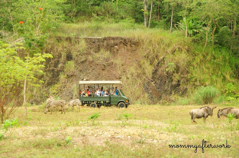Cebu Safari_Savannah Ride