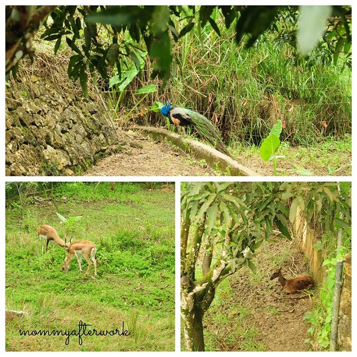 Cebu Safari_To Tigers Turf