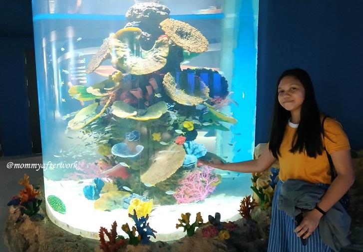 Cebu Ocean Park Corals