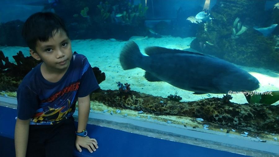 Cebu Ocean Park Oceanarium Fish